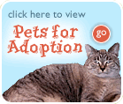animal-shelter-adoption
